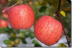 りんご農家