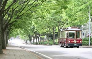 青葉山キャンパス風景