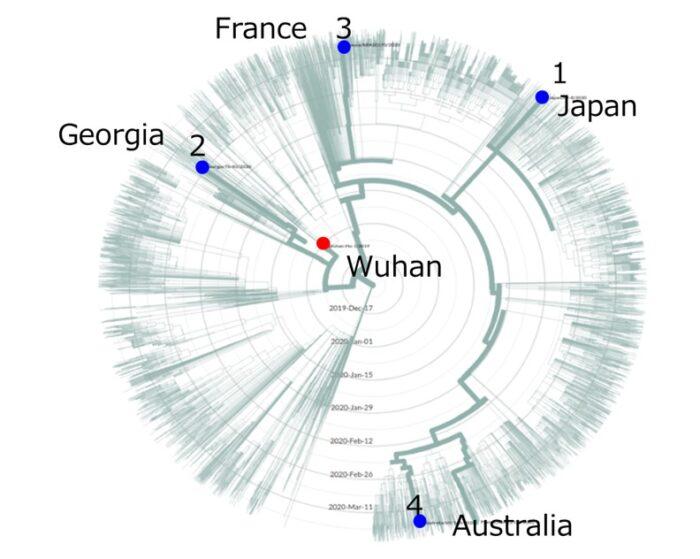 新型コロナウイルス変異種ゲノムの系統樹解析